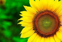 жёлтый / цвет