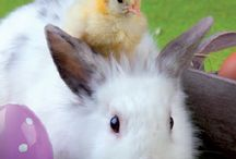 Ostern / Rexor wünscht frohe Ostern