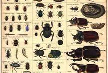Insekten,Spinnen,Weichtiere