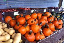Pumpkin / Pumpkin