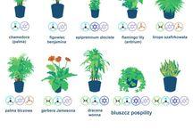 Növény gondozás