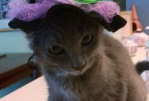 Cat in costumes by TheCatSite.com / TheCatSite.com is a community of cat lovers where we promote responsible cat care and the love of cats. These pictures were submitted by TCS members along the years. No cats were harmed during the creation of these photos (though the same can't always be said about the owners who took them).