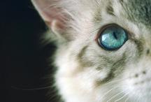 Feline / by Michal Russell