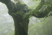 Δασος και φυση μαγικη