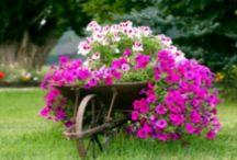jardim em carrinho de mão