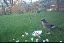 BirdCam Photos / These are photos taken with my Audobon BirdCam