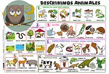 agustin imagenes animales