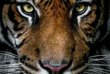 Wild Cat <3
