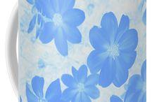 Blue Dahlias!