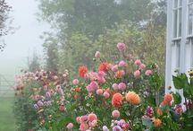 flower inspo.