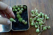 Plantas: suculentas, aéreas, flores etc,  / by Salida en Falso