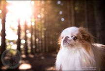 ::: Inspiration: Pet Photography ::: / For those that really love their furry family member.