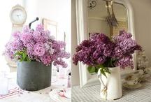 Flowers & Garden / by Tiffany Little