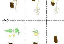medi plantes