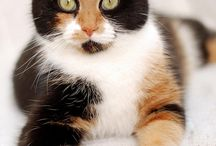 Vackra Katter