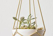 Plant* HOUSEPLANTS / Pokojové rostliny