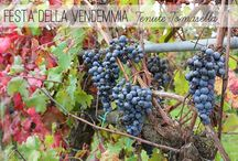 Vendemmia! Harvest! / Una giornata particolare insieme ai nostri amici e winelovers. I frutti di un'annata...nelle mani dei nostri giovani aiutanti, la vendemmia dei più piccini!