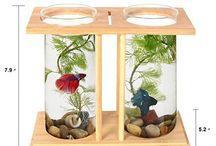 Aquarium ideal