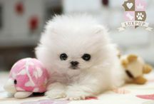 animaliac / animal with cuteness overload