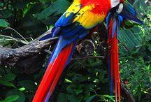 Birds,Birds, What Beautiful Birds / by Charlene Adams