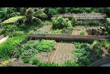 Hortas Orgânicas e Permacultura