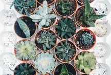 [Plants] / succ