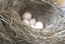 Birds,Birds & Nests / by Nona Mitchell