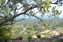 Luberon // Provence