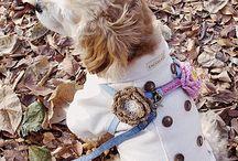 코콜라  coccola pet clothings / 귀엽고 시크한 강아지와 고양이 옷 코콜라 CoCCoLa 입니다.  사이즈 2XL까지, 코카스파니엘과 웰시코기, 비글들도 입을 수 있어요! 놀러 오세요^^ http://coccola.co.kr