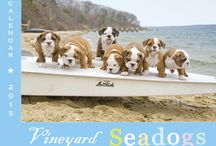 VINEYARD SEADOGS CALENDAR 2015 / A FETCHING GIFT IDEA! THE NEW VINEYARD SEADOGS 2015 CALENDAR AND SEADOGS HOLIDAY CARDS! SUPPORTS THE ANIMAL SHELTER OF MARTHA'S VINEYARD