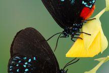Butterflies / by Vintage Belle Broken China Jewelry