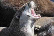 Otter / #Otter / Otter / #Otter is the new cute! Cute as hell.... more than #Catcontent