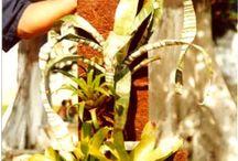 Projeto Plantando o Futuro / Em parceria coma Secretaria de Estado e Direitos Humanos, a Coco Verde Coco Verde se prontificou em oferecer a mão-de-obra e todos os insumos necessários ao desenvolvimento das plantas do Projeto Jardim Vertical, realizado dentro da Penitenciária Talavera Bruce, onde as presidiárias participavam de todas as etapas do processo de criação do Jardim Vertical, supervisionadas pelo engenheiro agrônomo Sr. Antonio Cosentino e complementada pelo engenheiro agrônomo Sr. Márcio Fonseca, da Secretaria.