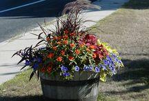 flores y decoracion