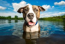 Decorating with pet photography