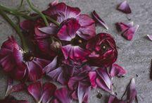 Flora Photography by Greta