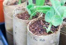 Pflanzen-Anzucht / Pflanzen muss man nicht kaufen, sondern kann sie selbst aus Samen ziehen. Wie das geht zeige ich euch hier auf diesem Board.