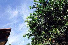 Cebu / The beautiful place I call home.