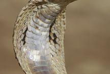 Węże6