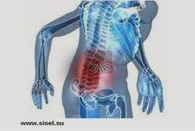 Здоровье суставов и костной системы