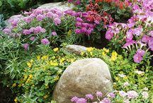 Gardening / by Abbie