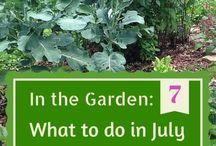 Garden - what to do in..
