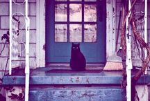 Cats around the world / by Black Cat Souvenirs