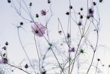 Flowers / by Denise Mabilog