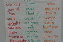 First Grade Science / by Mikala Salmeron