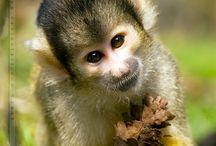 For the Love of Monkeys