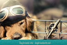 Dog breeds info / Dog breeds info - dogbreedsinfo.net