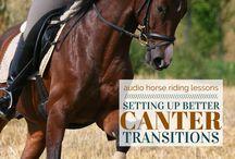Schooling young horses