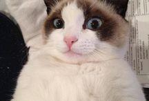 Cats =^..^= Anti-Tard / by Joan Halbig