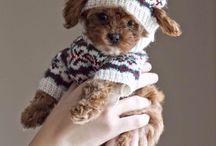 Schattigste Puppy